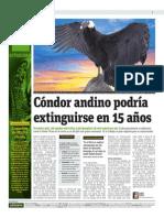 Cóndor Andino Podría Extinguirse en 15 Años
