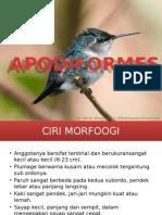 PRESENTASI APODIFORMES