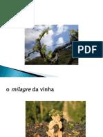 2_A Videira e Terroir.pdf