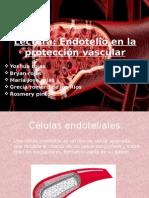 histologia lectura endotelio