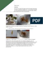 articulo algas y protozoos.docx