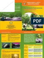 Paecilomyces_fumosoroseus triptico