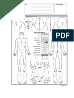 CSL - Body Chart
