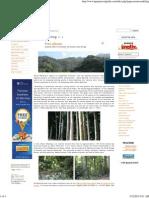 Laguna Travel Guide - Mount Makiling
