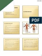 Anatomofisiología Locomotor Clase 1.2