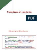 Transcripción en eucariontes