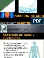 Absorción de Agua y Electrolitos