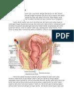 Anatomi Anal Canal