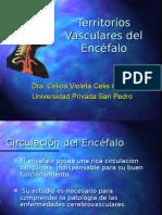 Territorios Vasculares Del Encefalo