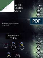 Replicarea Plasmidelor Circulare