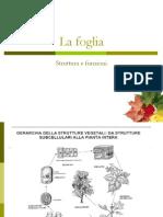 Biol Sistem Veget 1112 17-La Foglia