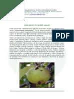 crvljivost_plodova_jabuke