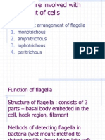 5. Structure Involved With Movement of Cells