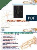 PLEXO+BRAQUIAL