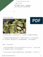 【 水龟草 】 治疗肾病与尿酸!请分享,功德无量!.pdf