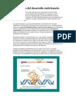 Genetica Del Desarrollo Embrionario