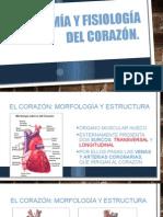 Anatomía y Fisiología Del Corazón