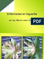 Enfermedad en Higuerilla