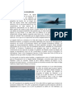 Vaquita marina1