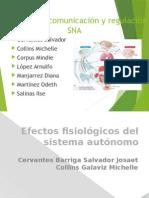 sistemasderegulacionsna-131127175456-phpapp01