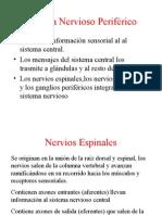 Sistema Nervioso Perifrico 1224477027192088 9
