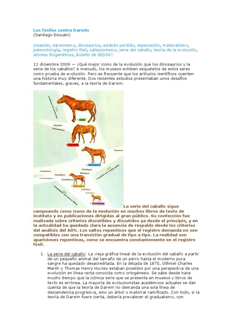 evolución del árbol de caballo