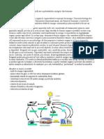 Tehnologii de valorificare a potentialului energetic din biomasa