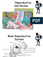 reproductive system powerpoint1
