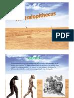 australopithecus-110903133901-phpapp02.pdf