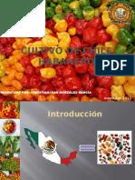 Cultivo de Chile Habanero