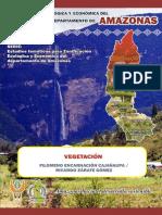 Zonificación Region Amazonas