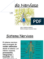 Apunte tejido nervioso
