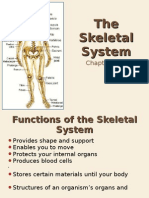 10-2 the Skeletal System Web Version