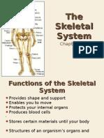 10-2 the Skeletal System Web Version