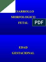 DESARROLLO FISIOLOGICO 2
