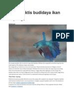 Cara Praktis Budidaya Ikan Cupang