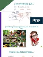Botânica 1 - Briófitas.pdf