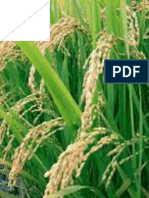 Contribution of genetic x temperature interaction to performance and variance of rice yield in Indonesia