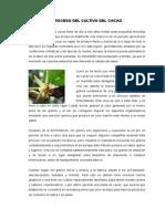 Proceso Del Cultivo Del Cacao