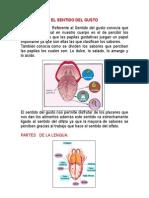 EL SENTIDO DEL GUSTO Y TACTO.docx