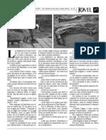 Revista Jóvel (parte2)