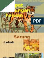 Tempat Perlindungan Haiwan