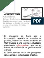 Glucogénesis.pptx