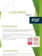 TEJIDO ANIMAL.pptx