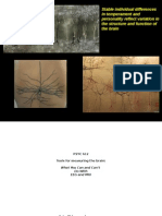 Shackman Psyc210 Module09 IntermediatePhenotypesImaging2