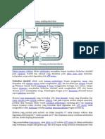Mikrobiologi Fosforilasi Oksidatif Lngkap