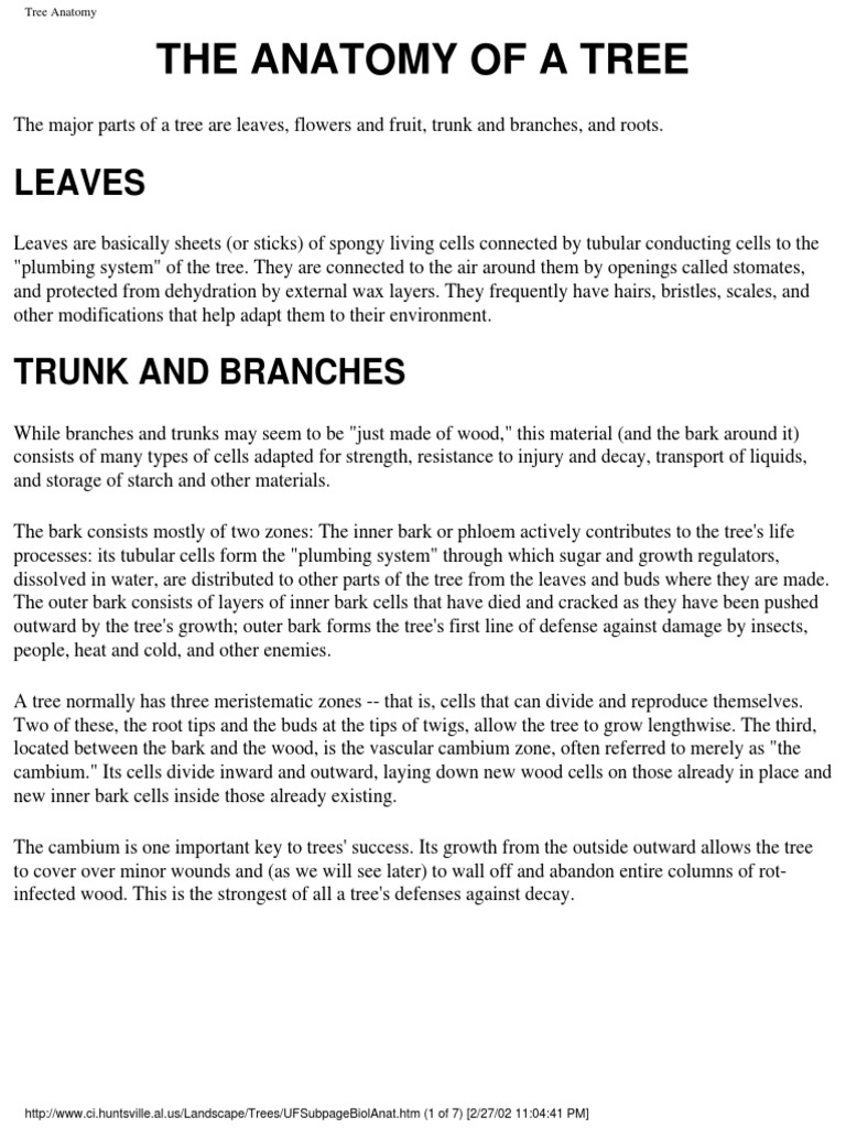 Huntsville Tree Guide | Mulch | Bark