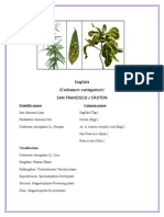 Sagilala Plant