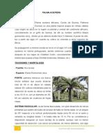 CUTIVO Palma Aceitera