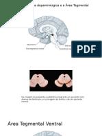 A substância negra dopaminérgica e a Ã-rea Tegmental